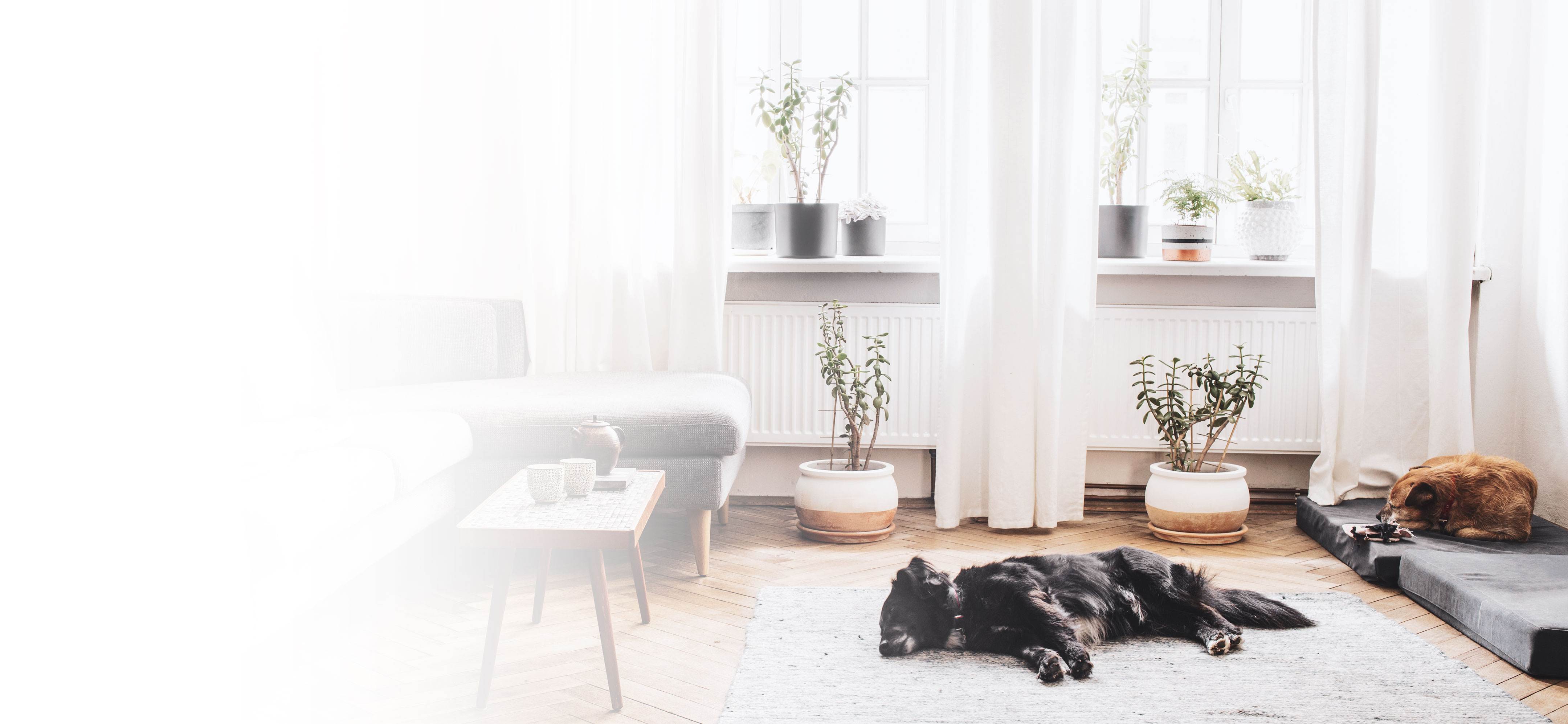 dogs resting in an apartment