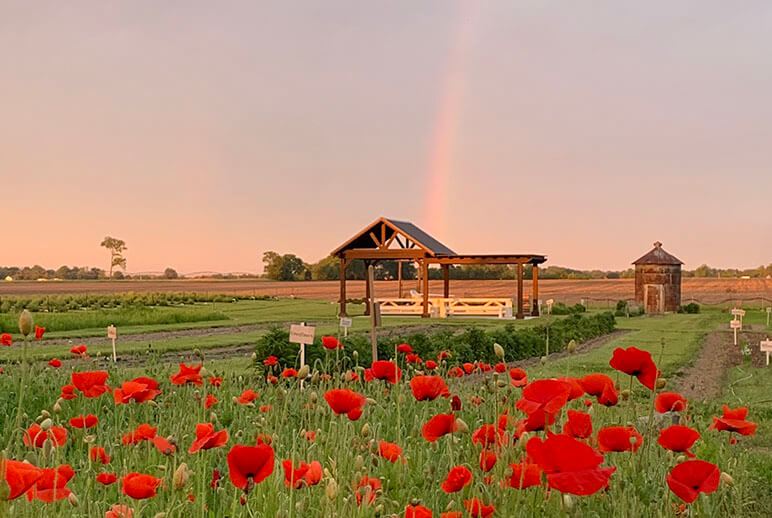 Dollie's farm with rainbow in the background