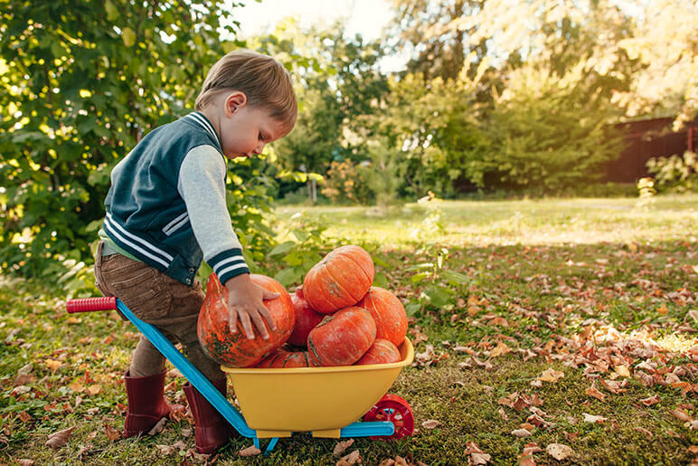 Little boy at a pumpkin patch with a miniature wheel barrel full of small pumpkins