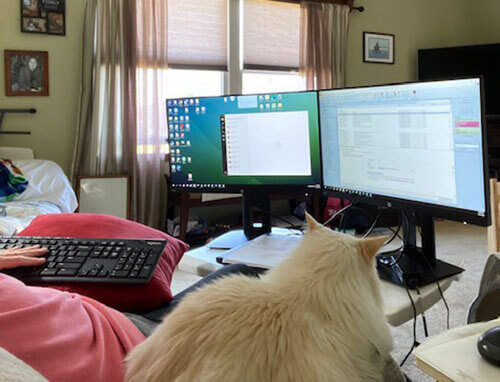 Woman in front of her computer with cat watching the two computer monitors