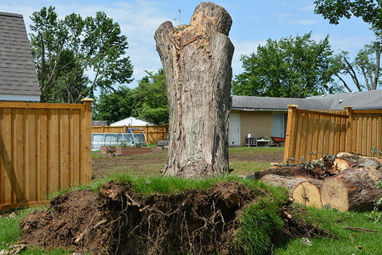 Photo of an uprooted tree from the storm